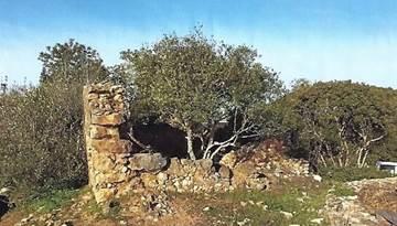 Terrain avec Ruine à construction en Barão de São Miguel